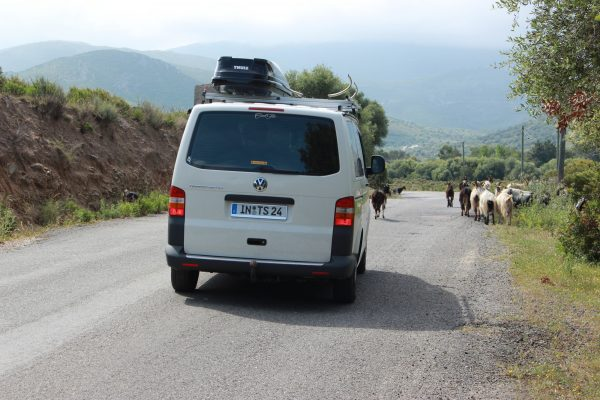 Korsika Roadtrip on the road Ziegen
