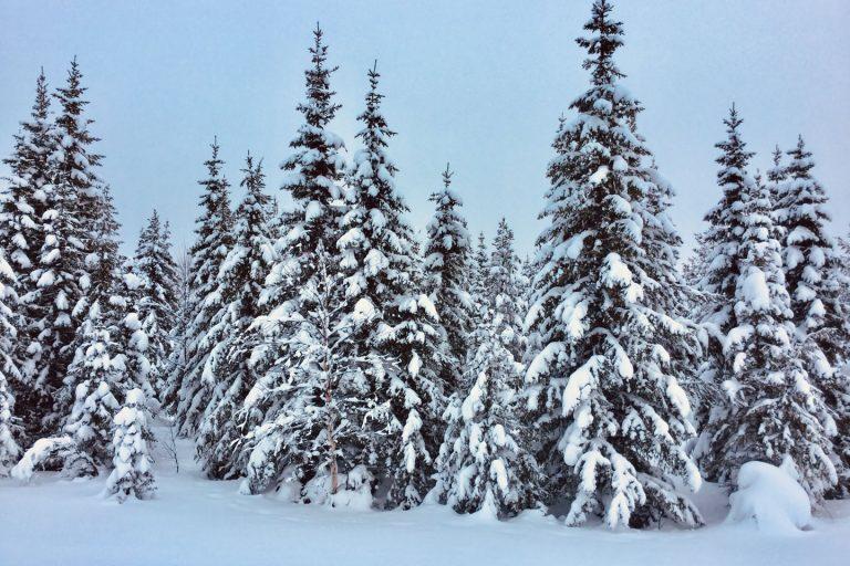 Roadtrip Lappland Winter Schnee Winterwonderland