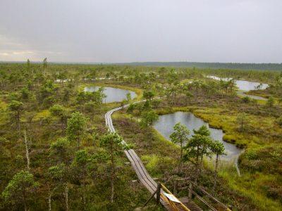 Roadtrip Lettland Moor Moorlandschaft the euroamers
