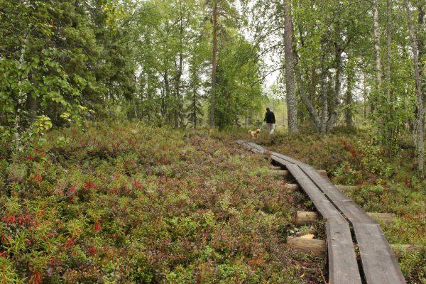 Holzpfad Finnland