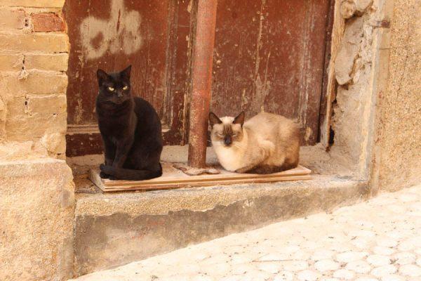 Straßenkatzen Sizilien