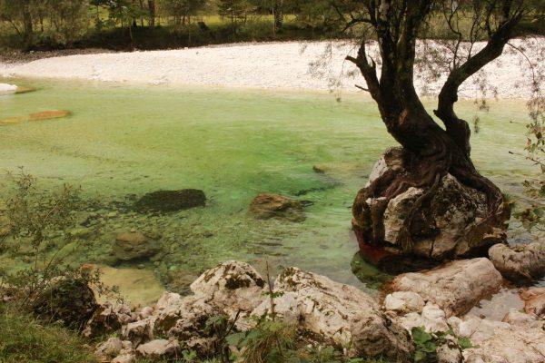 Soča Slowenien klares Wasser