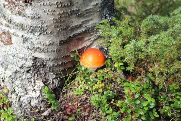 finnische-Natur