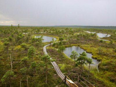 Moorlandschaft Baltikum