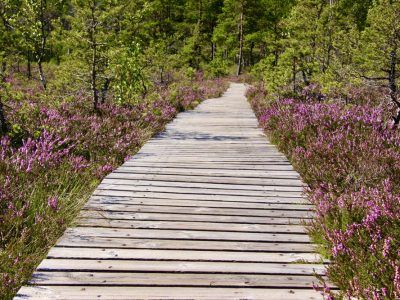 Holzsteg Moorlandschaft Baltikum