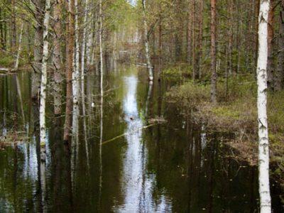 Sumpfgebiet Baltikum