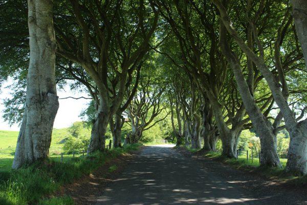 Dark-Hedges GoT Nordirland