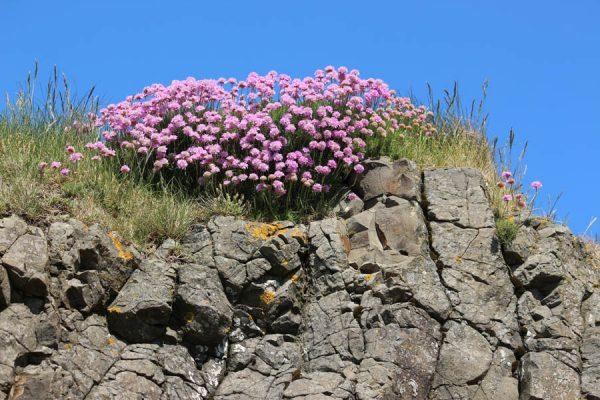 Pflanzen Nordirland