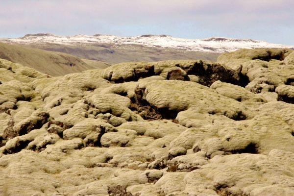 Eldrhaun Island Moos