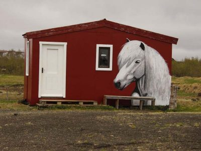 Pferdehof reiten Pferd Island
