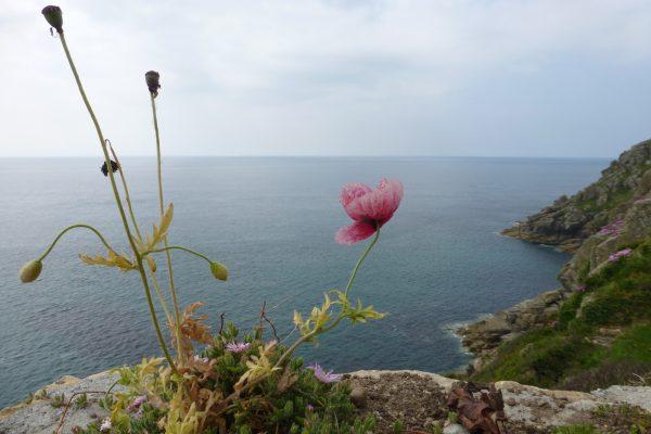 Küste Coast Cornwall